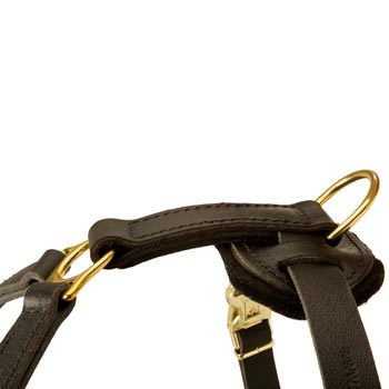 Corrosion Resistant D-ring of Dog Harness