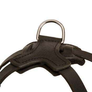 D-ring Attached to Dog Harness